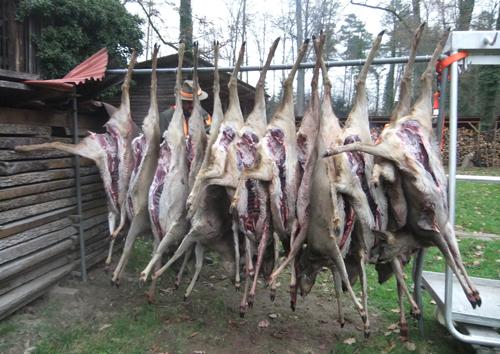 Schüsse im Wald: Treibjagd in Hirschneuses